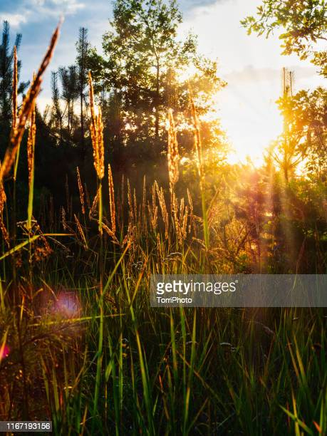 meadow sunset - ukraine landscape stock pictures, royalty-free photos & images