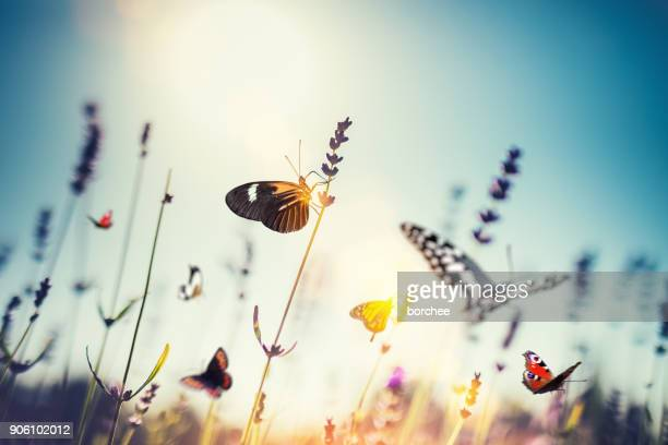 meadow with butterflies - tranquil scene stock pictures, royalty-free photos & images