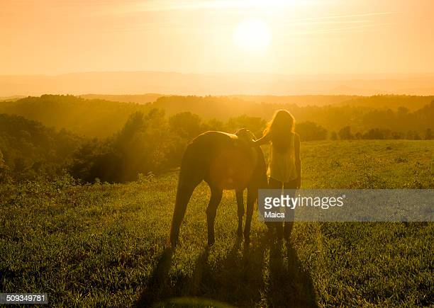 Meadow with Horse