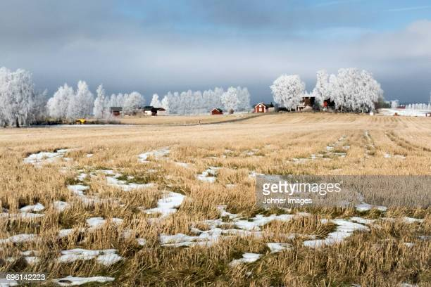 Meadow with snow