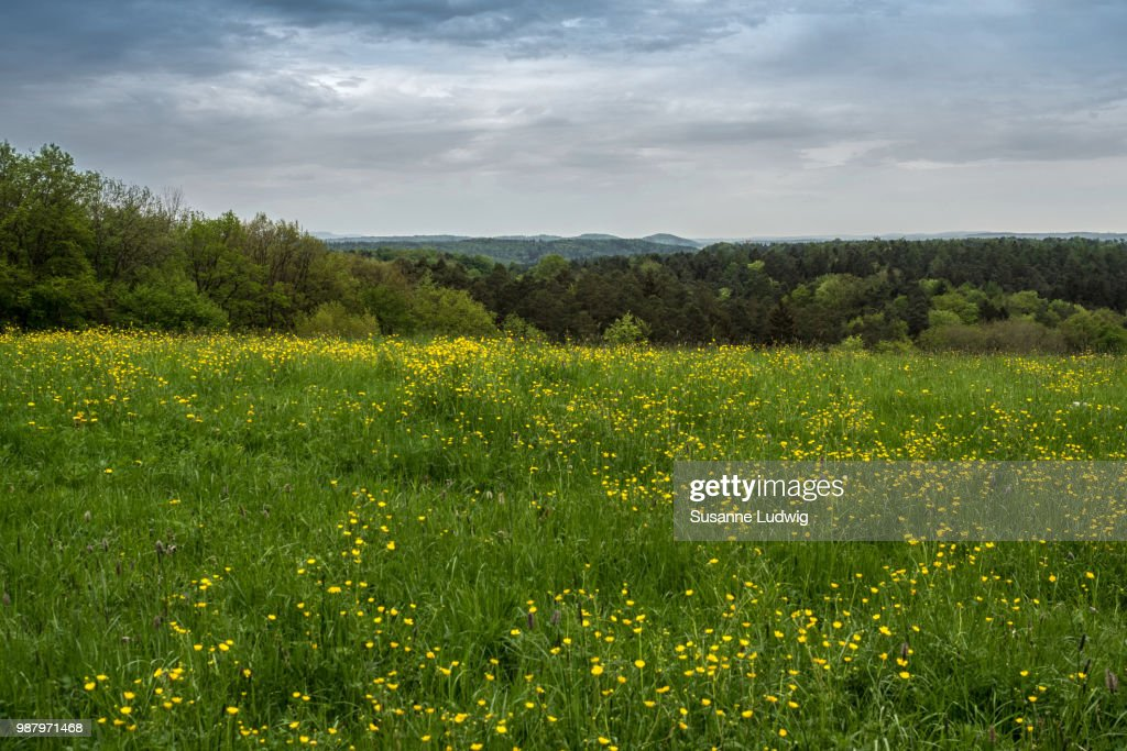 meadow with view : Photo
