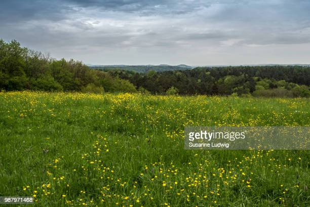 meadow with view