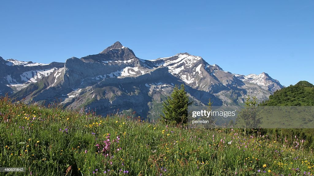 Meadow with wildflowers and Oldenhorn : Stock Photo