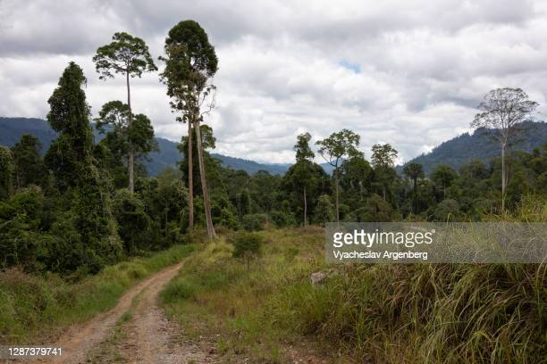 meadows in maliau basin, cloudy sky, borneo, malaysia - argenberg stock pictures, royalty-free photos & images