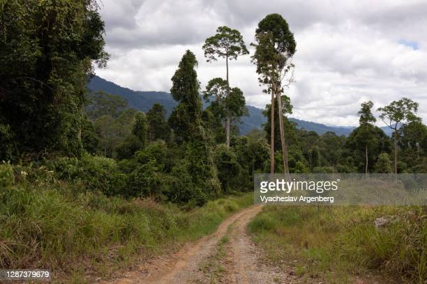 meadows in maliau basin, dipterocarp trees, borneo, malaysia - argenberg stock pictures, royalty-free photos & images