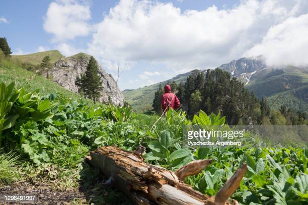 meadows in shisha valley, adygea, caucasus mountains - argenberg stock pictures, royalty-free photos & images
