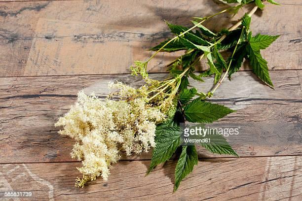 Meadowsweet on wood