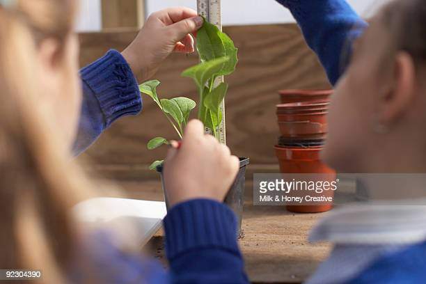 measuring plants - children only stock pictures, royalty-free photos & images