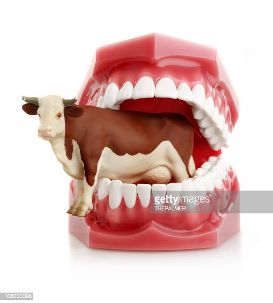 meat lover teeth - molar stock pictures, royalty-free photos & images