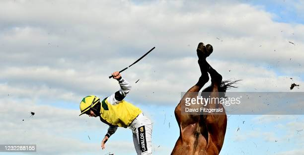 Meath , Ireland - 13 April 2021; Jockey Conor Orr falls from Castlebellingham during the Fairyhouse Evening Racing May 28th Beginners stepplechase at...