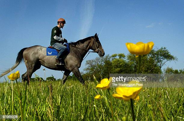 me/barbaro DATE May 17 2007 CREDIT Ricky Carioti / TWP Fair Hill Training Center in Elkton Md EDITOR remote Alex Brown an exercise horse rider who is...