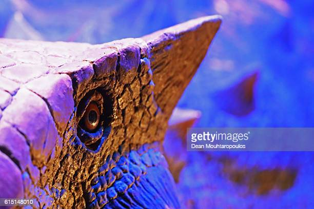 A mechanical display Tyrannosaurus Rex a genus of coelurosaurian theropod dinosaur one of the most wellrepresented of the large theropods and the...