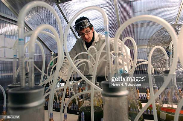 Mechanical Engineering student Mark Machacek monitors the different species of microalgae that the lab is growing from which they hope to extract oil...