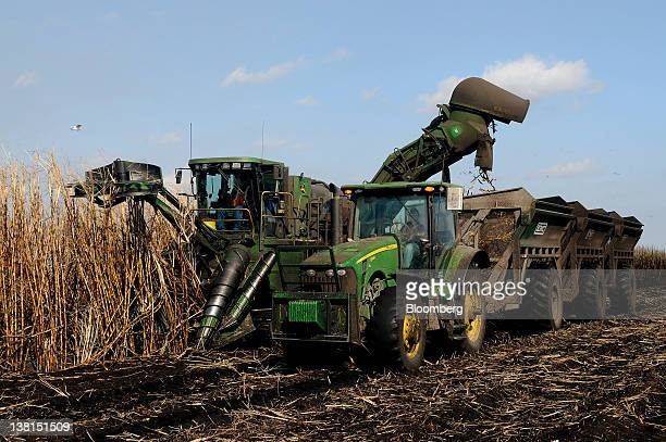 A mechanical sugar cane harvester dumps cut cane into loading bins during harvest at a US Sugar Corp farm in Clewiston Florida US on Wednesday Feb 1...