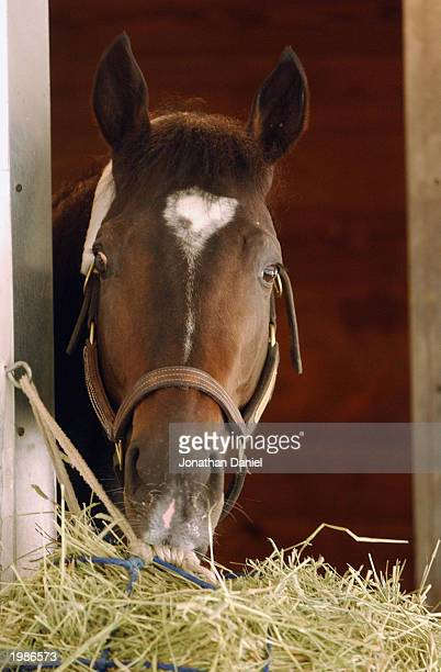 Medaglia d'Oro during morning workouts in preparation for the Breeders Cup Classic at the 2002 Breeders Cup World Thoroughbred Championships at...