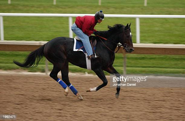 Medaglia d'Oro during morning workouts in preparation for the Breeders Cup Classic for the 2002 Breeders Cup World Thoroughbred Championships at...