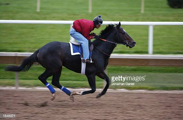 Medaglia d'Oro trained by Robert Frankel and entered in the Breeders' Cup Classic race runs during morning workouts for the 2002 Breeders' Cup World...