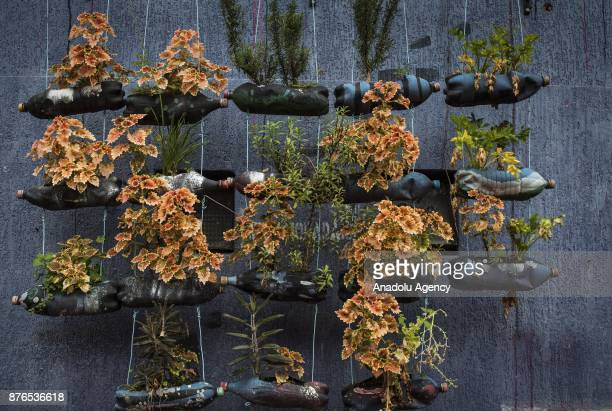 Flowers planted in plastic bottles are seen in Medellin Colombia on November 19 2017 Mural graffitis from different artists street art can be seen in...