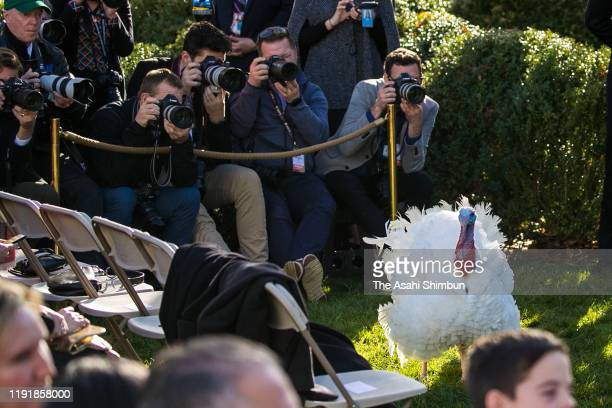 Media photographers shoots a turkey 'pardoned' by U.S. President Donald Trump during the traditional event in the Rose Garden of the White House...