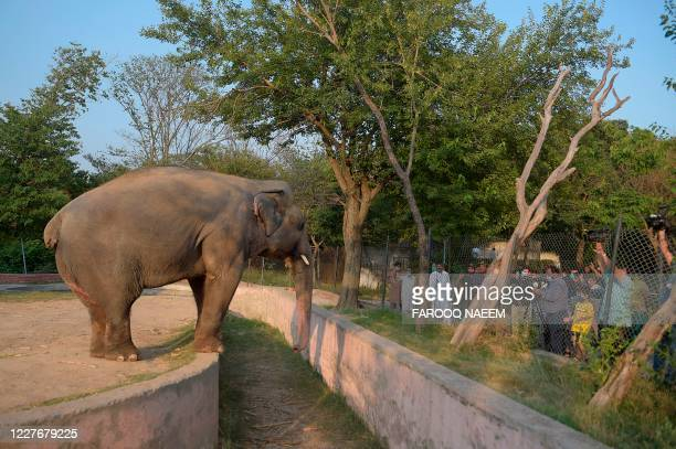 Media representatives take video and photographs of Elephant Kaavan as it stands behind a fence at the Marghazar Zoo in Islamabad on July 18, 2020. -...