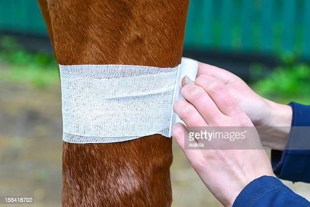 medical bandage for horse