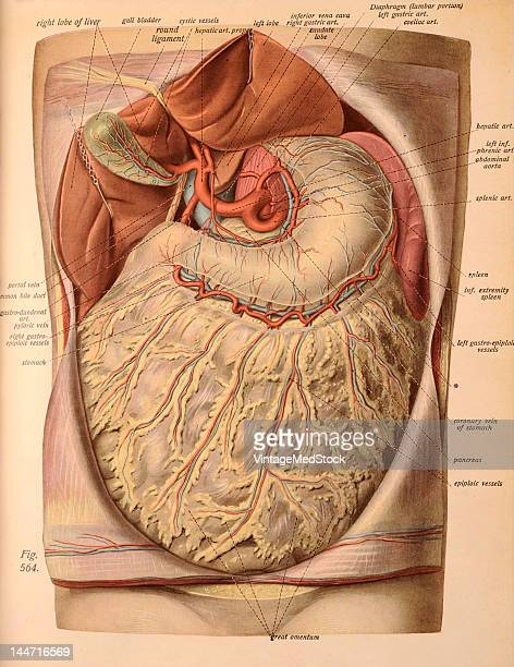 Atlas And Text Book Of Human Anatomy Stock Photos And Pictures