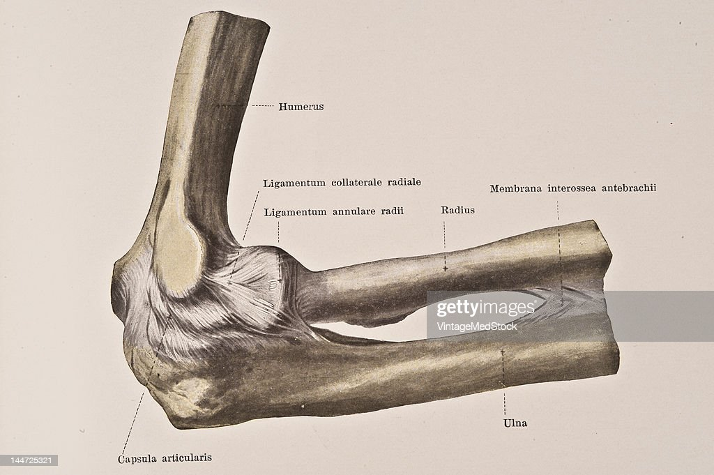 Right Elbow Joint II Pictures | Getty Images