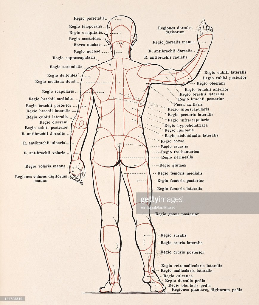 Regions Of The Body Ii Pictures Getty Images