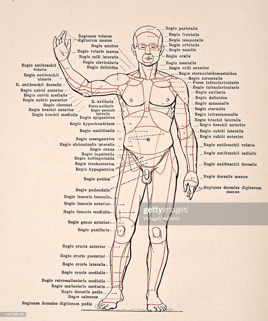 Regions Of The Body Pictures Getty Images