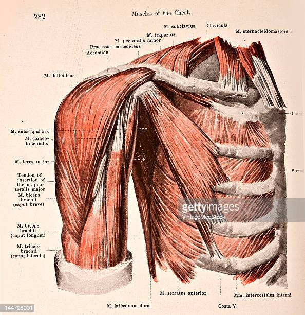 Medical illustration from 'Hand-Atlas of Human Anatomy, volume 2' shows the muscles of the right side of the chest, view from the front, 1923.