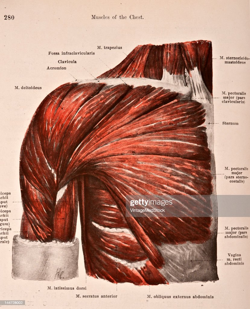 Chest Diagram Side View Schematic Diagrams