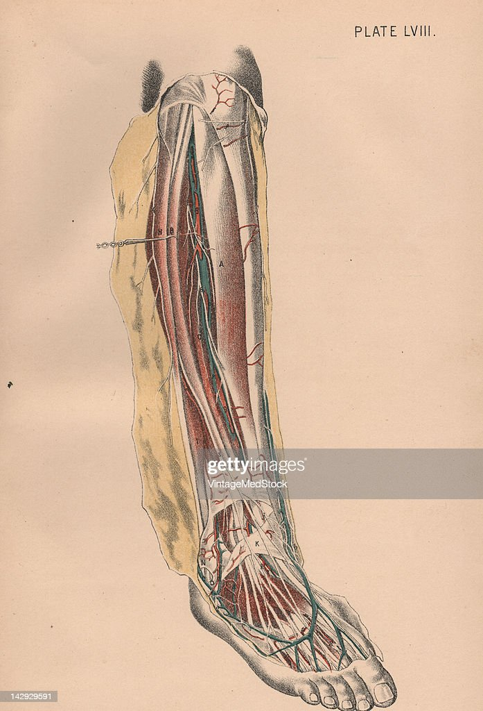 Ricght Leg Iii Pictures Getty Images