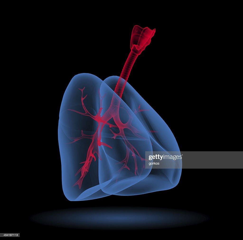 3 D ilustração médicos-pulmões com visível Brônquio : Foto de stock