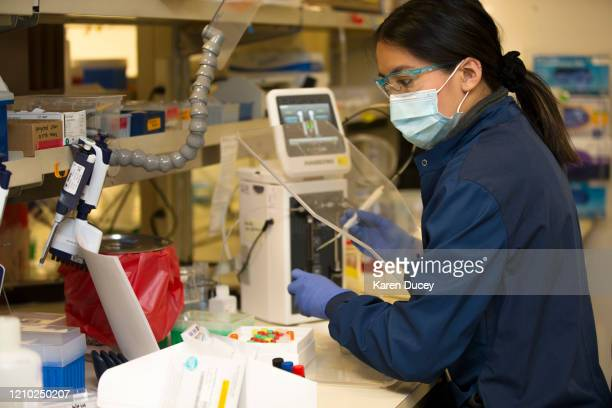 Medical laboratory scientist Alicia Bui runs a clinical test in the Immunology lab at UW Medicine looking for antibodies against SARSCoV2 a virus...