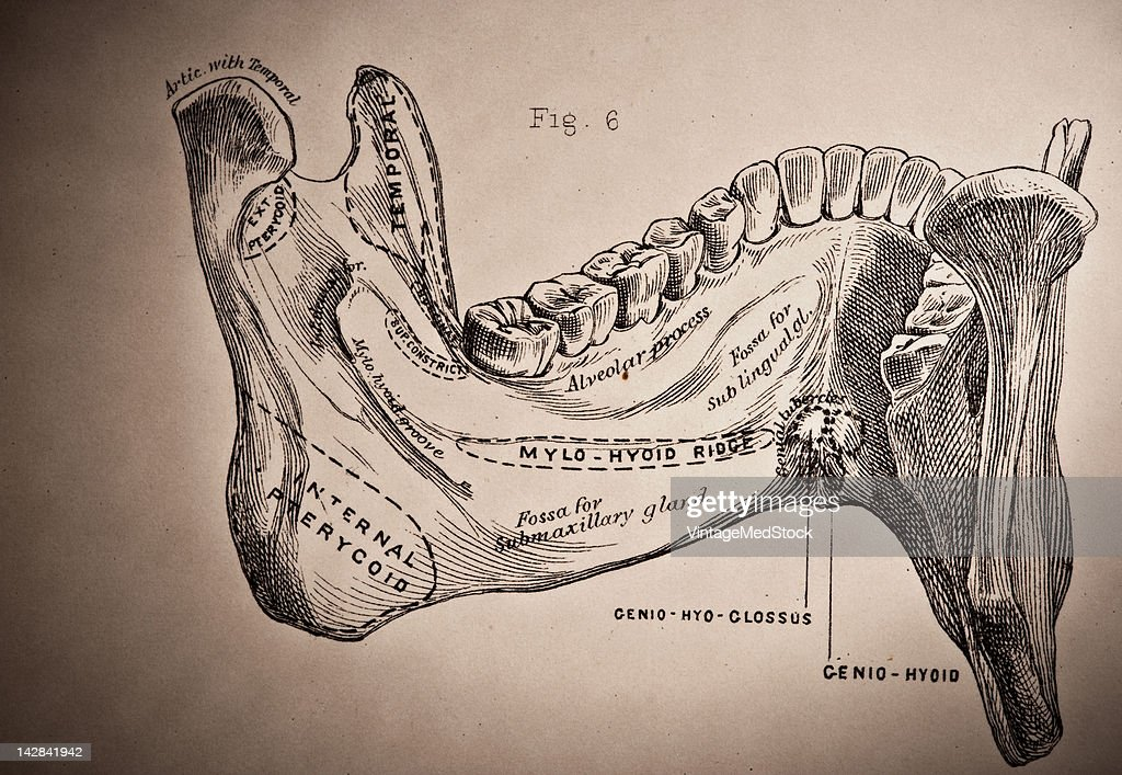 Mandible Pictures Getty Images