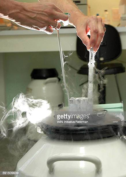 Medical personnel removing human cell from liquid nitrogen