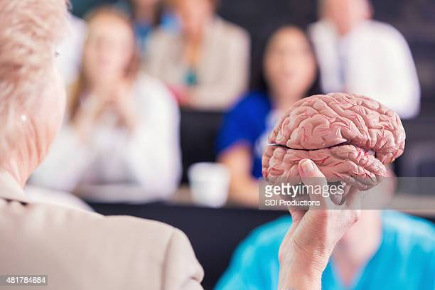 Medical professor using human brain model to teach college class