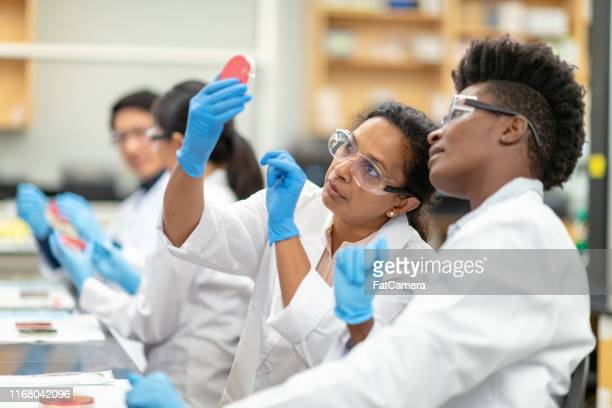 medical research team analyzing samples in a laboratory - microbiology stock pictures, royalty-free photos & images