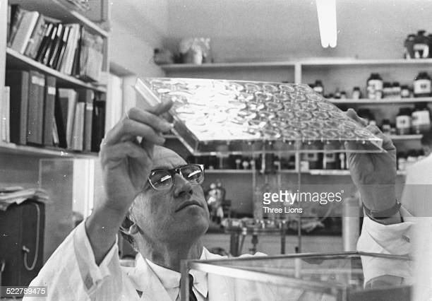 Medical researcher Dr Jonas Salk studying slides in his laboratory following the invention of his pioneering polio vaccine circa 1957