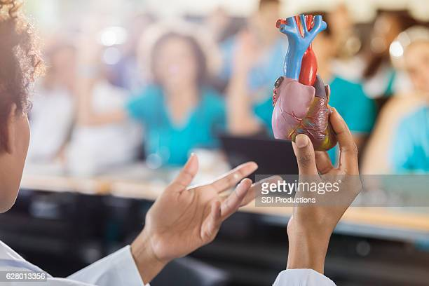 medical school professor teaches about the human heart - human heart stock pictures, royalty-free photos & images
