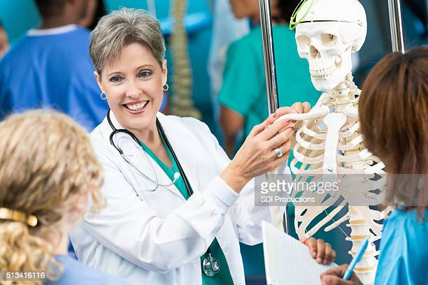 medical school professor teaches anatomy class - human skeleton stock photos and pictures
