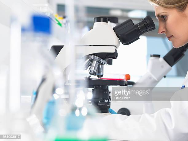 medical scientist viewing sample slide under a microscope in a laboratory - cancer stock photos and pictures