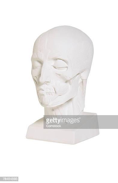 Medical sculpture of human head