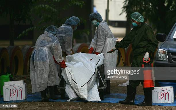 Medical spray corpses with disinfectant at a makeshift morgue inside a Buddhist temple on January 1 2005 in Takuapa 175 km north of Phuket Thailand...