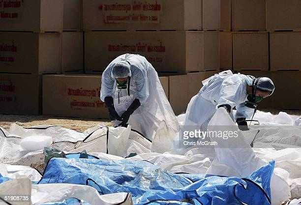 Medical workers attach tags to bodies in a makeshift morgue inside a Buddhist temple on January 2 2005 in Takua Pa Thailand The bloated and decayed...