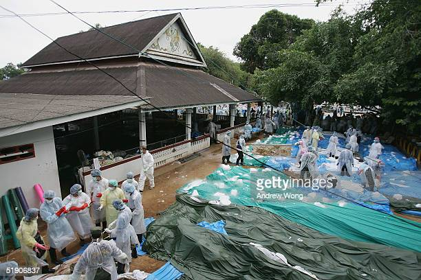 Medical workers check newly arrived corpses at a makeshift morgue inside a Buddhist temple on January 1 2005 in Takuapa 175 km north of Phuket...