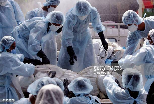 Medical workers load a corpse on to a truck in a makeshift morgue inside a Buddhist temple on January 2 2005 in Takuap Pa Thailand The bloated and...