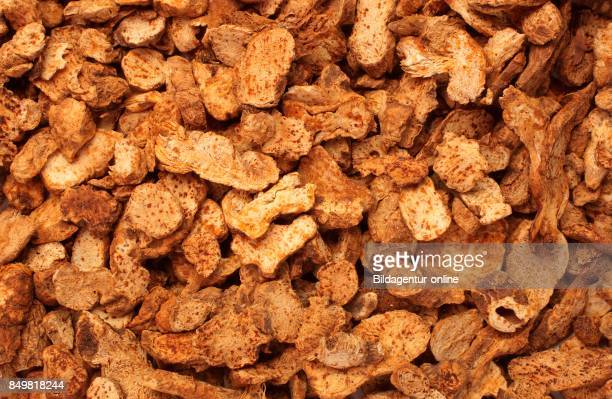 Medicinal Plant Chinese Atractylodes Atractylodes Lancea Cang Zhu Dried Roots
