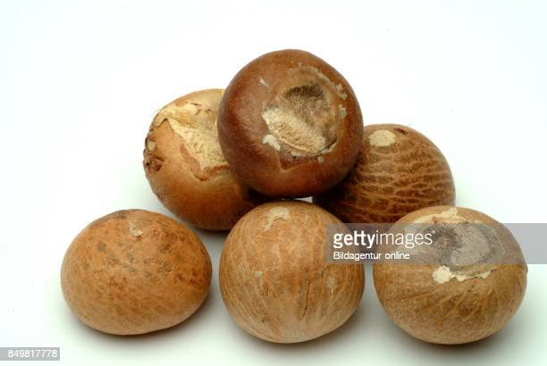 Medicinal Plant Nut Seed Of Areca Catechu Areca Nut Areca Palm Areca Nut Palm Betel Palm Indian Nut Pinang Palm