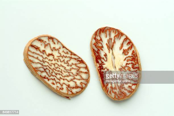 Medicinal Plant Sliced Seed Of Areca Catechu Areca Nut Areca Palm Areca Nut Palm Betel Palm Indian Nut Pinang Palm